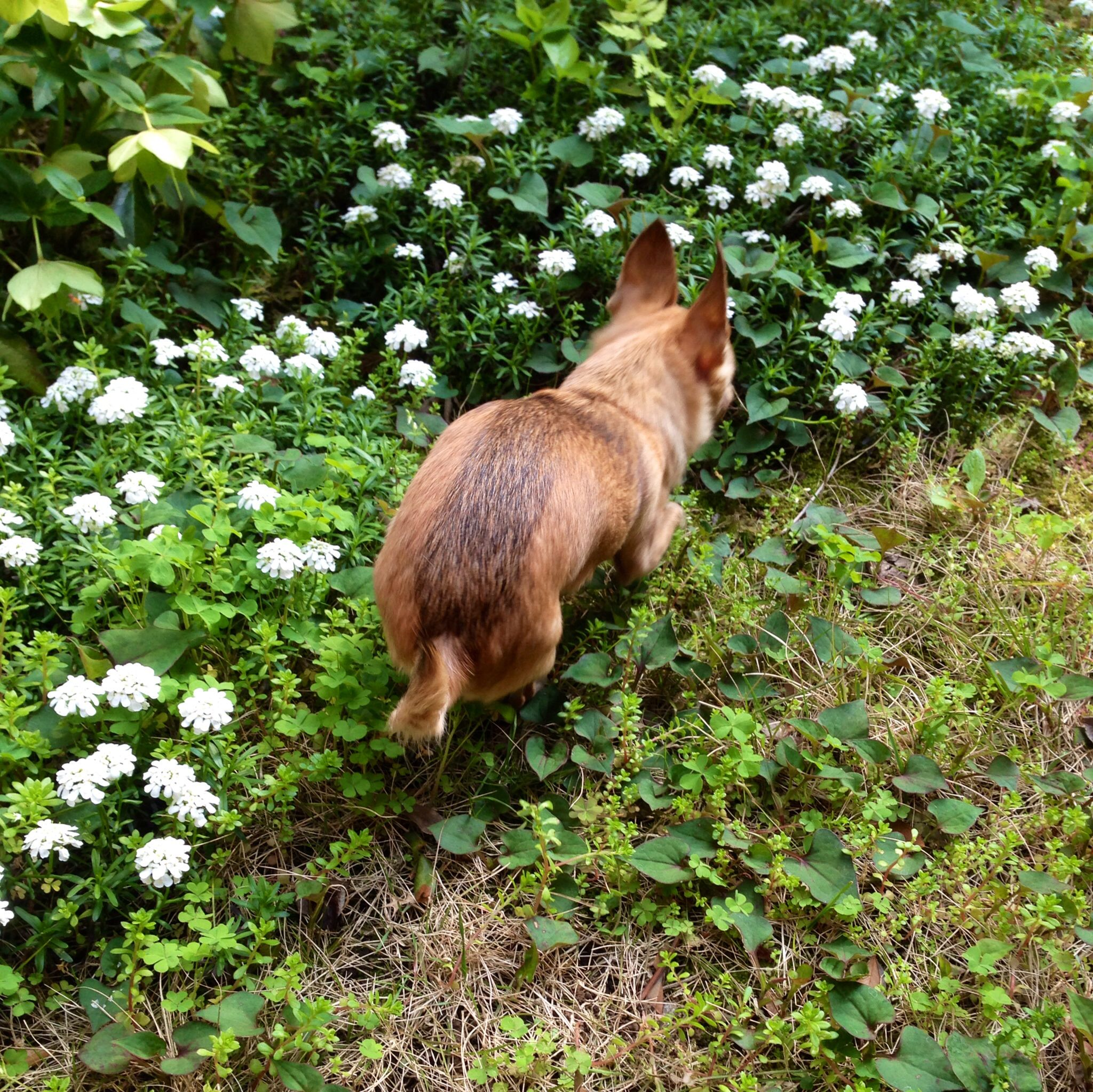 #teto #dog #garden