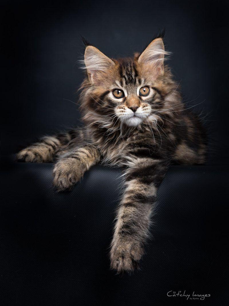Pin On I Cats