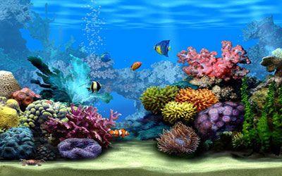 Free 3d moving screensavers living marine aquarium 2 animated wallpaper wallpapers places - Fish tank screensaver pc free ...