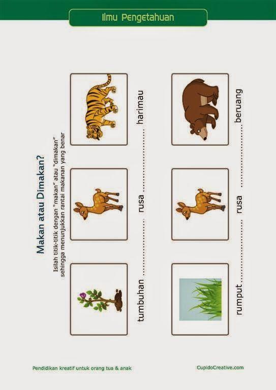 Belajar Ilmu Pengetahuan Anak Kelas 3 Sd Rantai Makanan Pemangsa