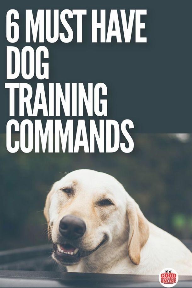 Dog Training Kit For Kids Dog Training 12 Weeks Old Dog