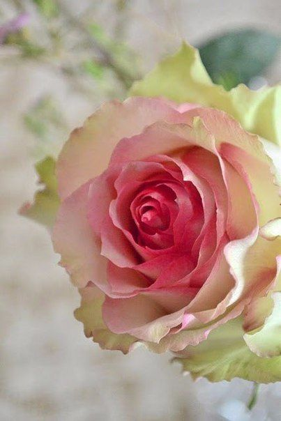 Фото цветов на маил