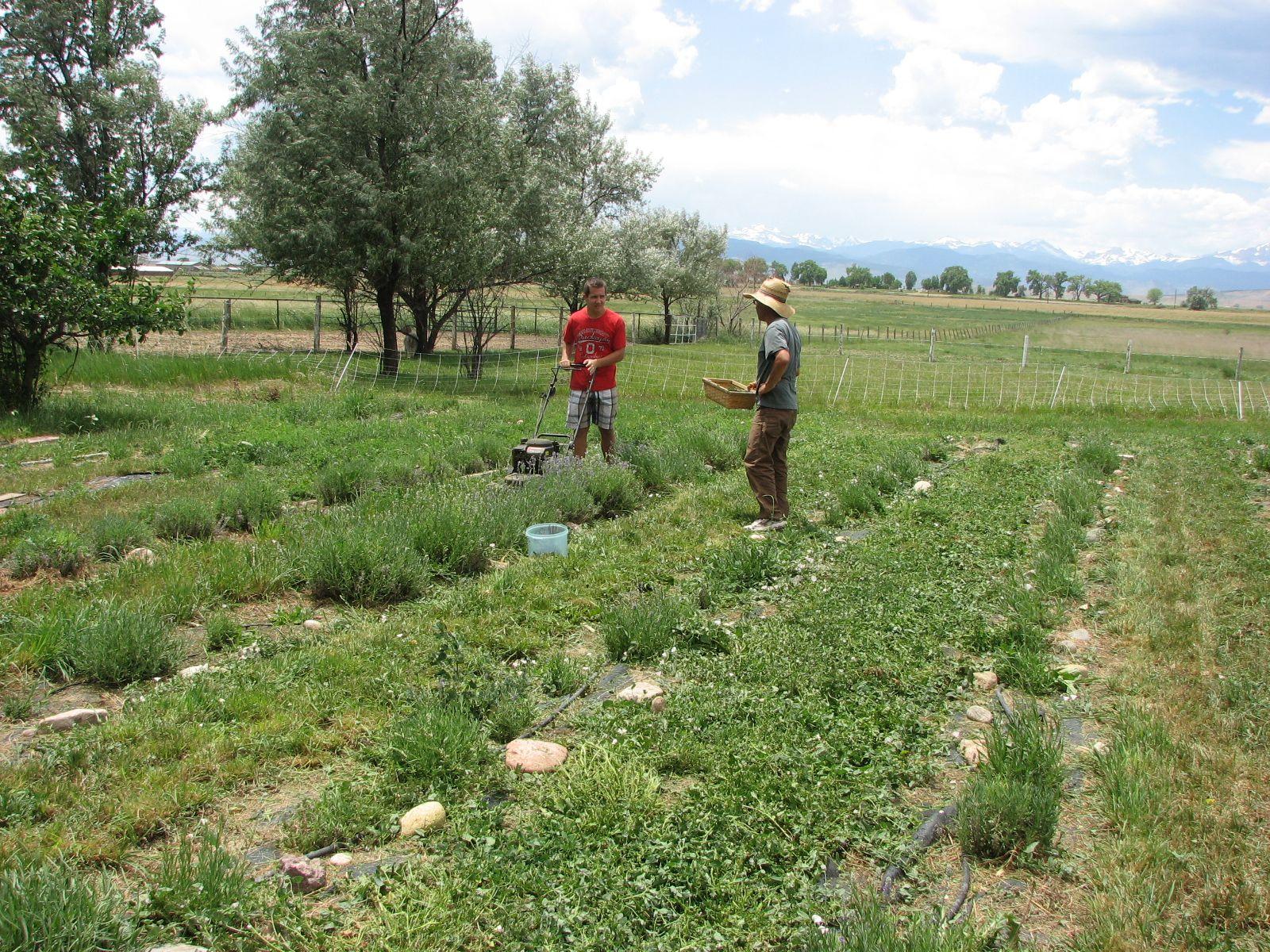 Pin on Farming/Gardening