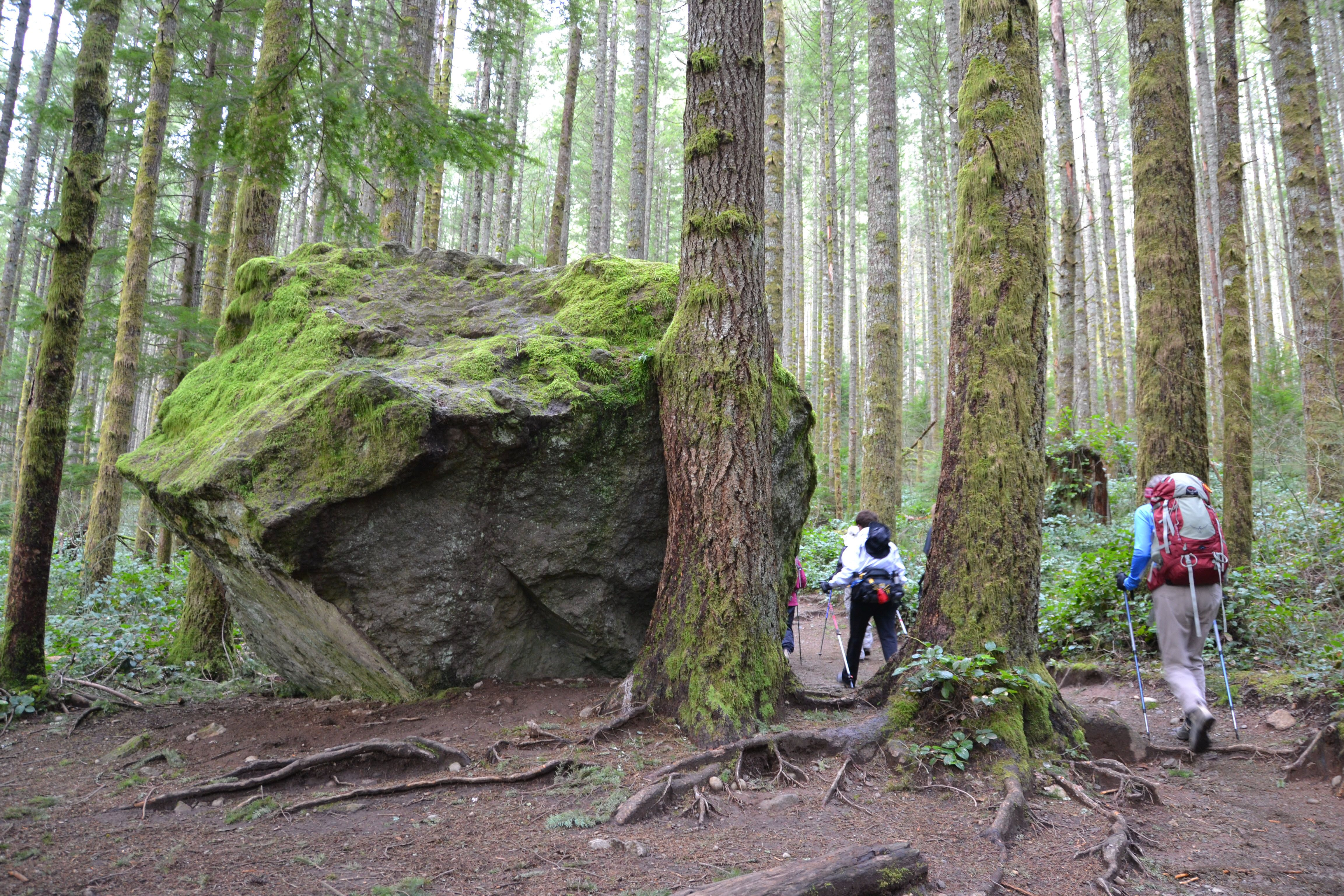 Best Spring Hikes In The Seattle Area For Kids And