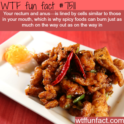 Why spicy food burn on the way out.. - WTF FUN FACTS | Fun ...  Why spicy food ...