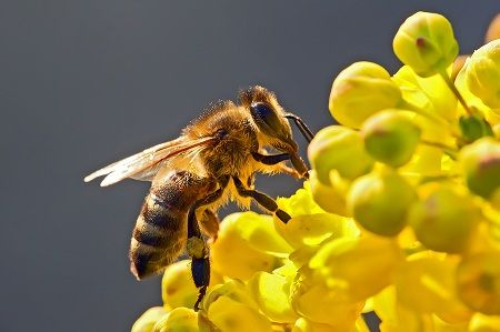 Beekeepers 15 Years of Research on Pesticides Halted When State Steals His Bee Hives