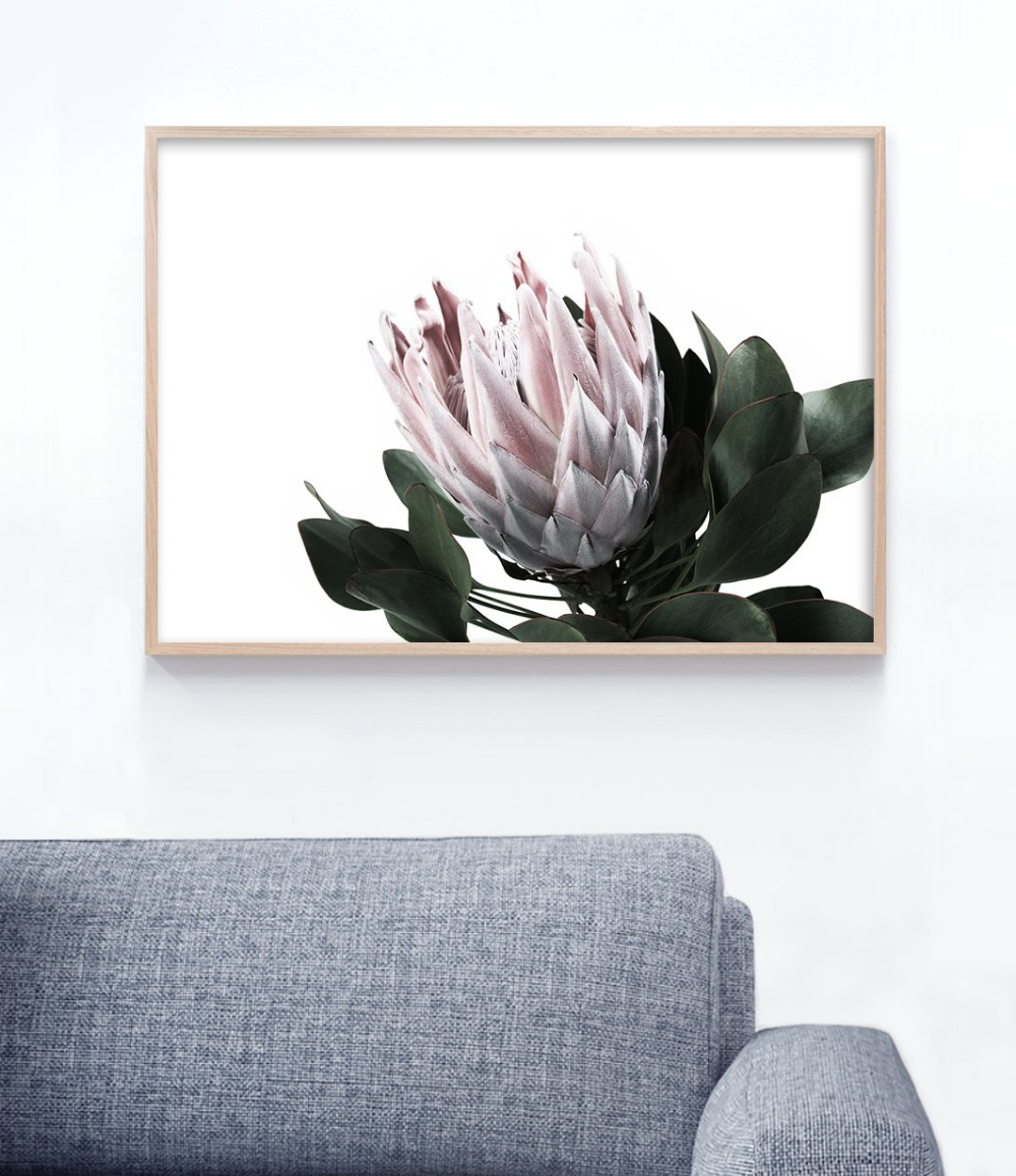Protea Print Landscape Protea Art Floral Wall Art Flower Prints Art