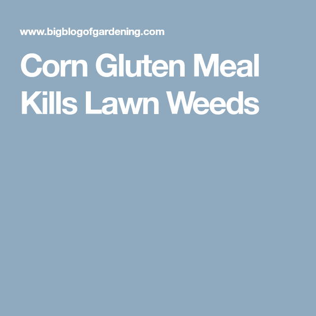 Corn Gluten Meal Kills Lawn Weeds