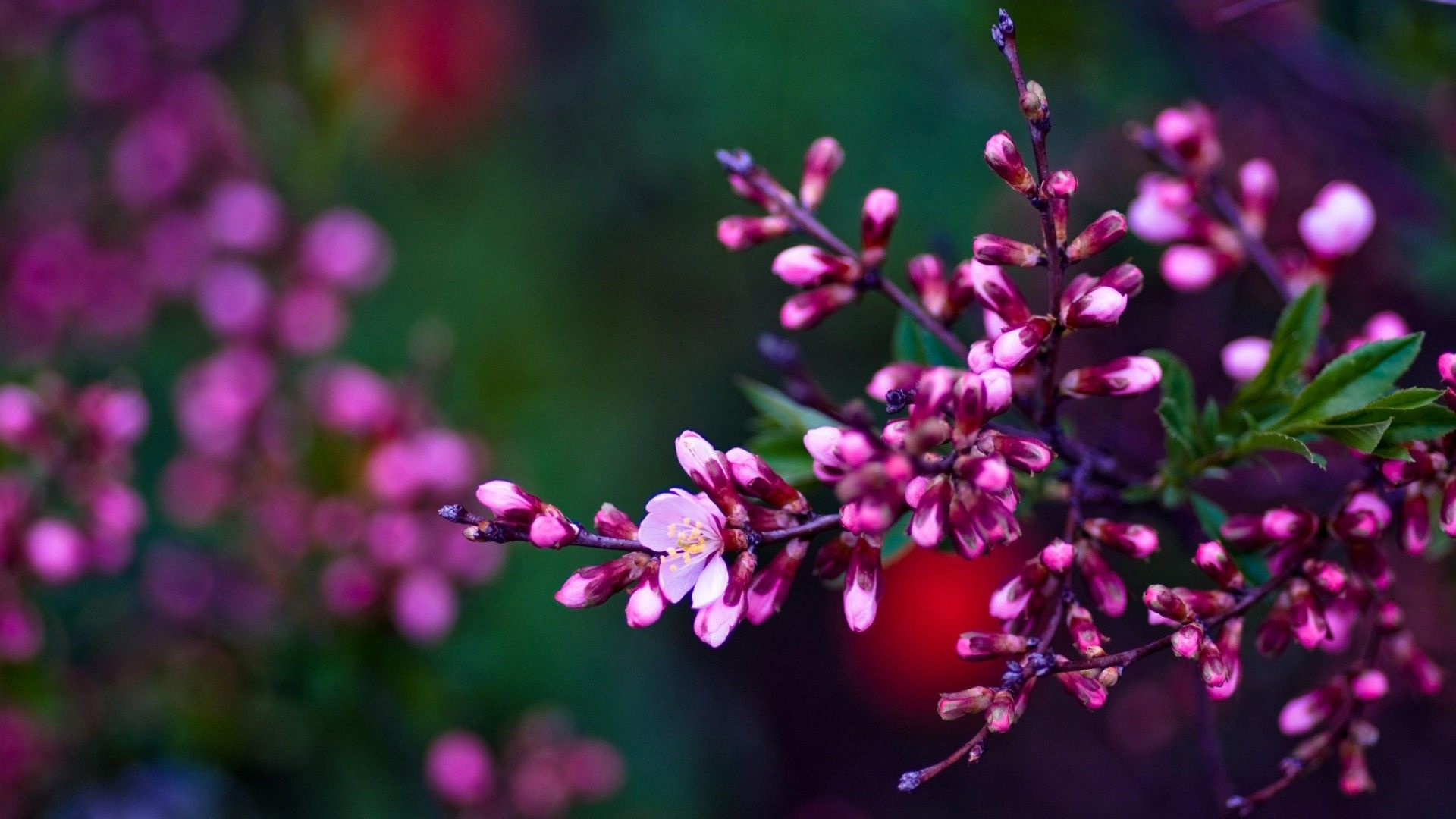 Spring Flowers Wallpaper Hd | Natures Wallpapers ...
