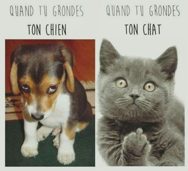 Chat vs chien humour pinterest dr le chat et - Dessin chat rigolo ...