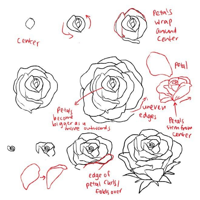 Almost As Cool As You Roses Drawing Flower Drawing Flower Drawing Tutorials