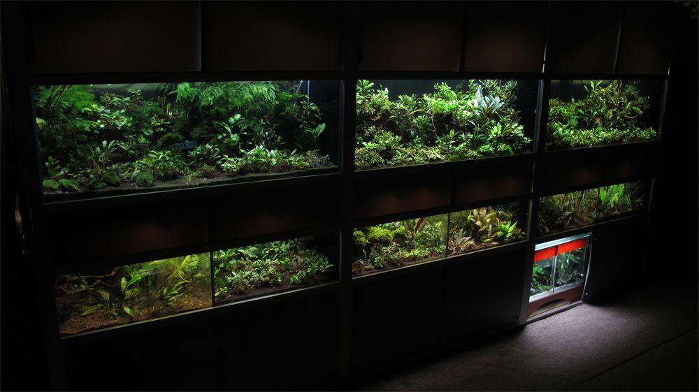 Pin On Aquarium Design And Fish Freshwater