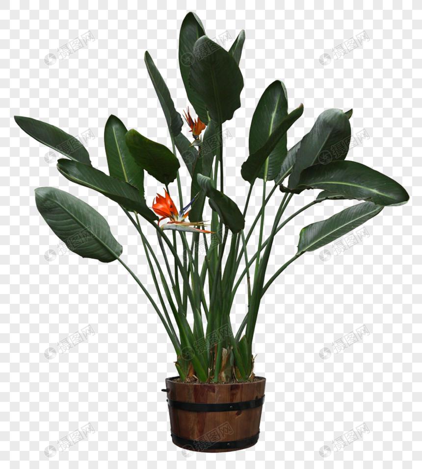 Potted Plants Google Search Dinding Tanaman Tanaman Pot Bunga Kaktus