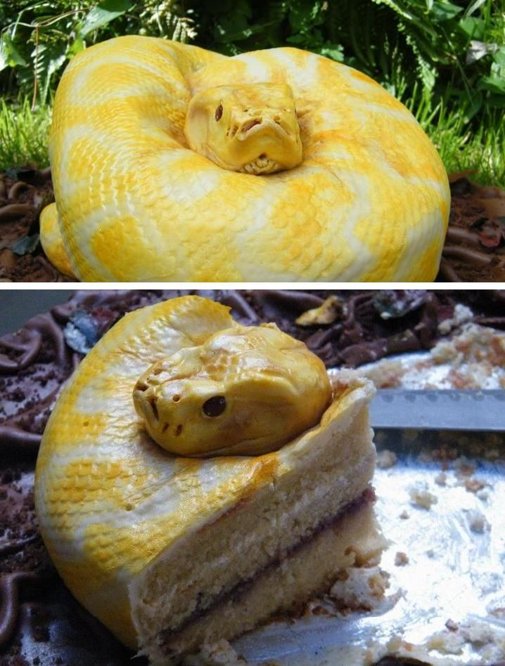 "Scary Snake Cake from ""North Star Cakes"""