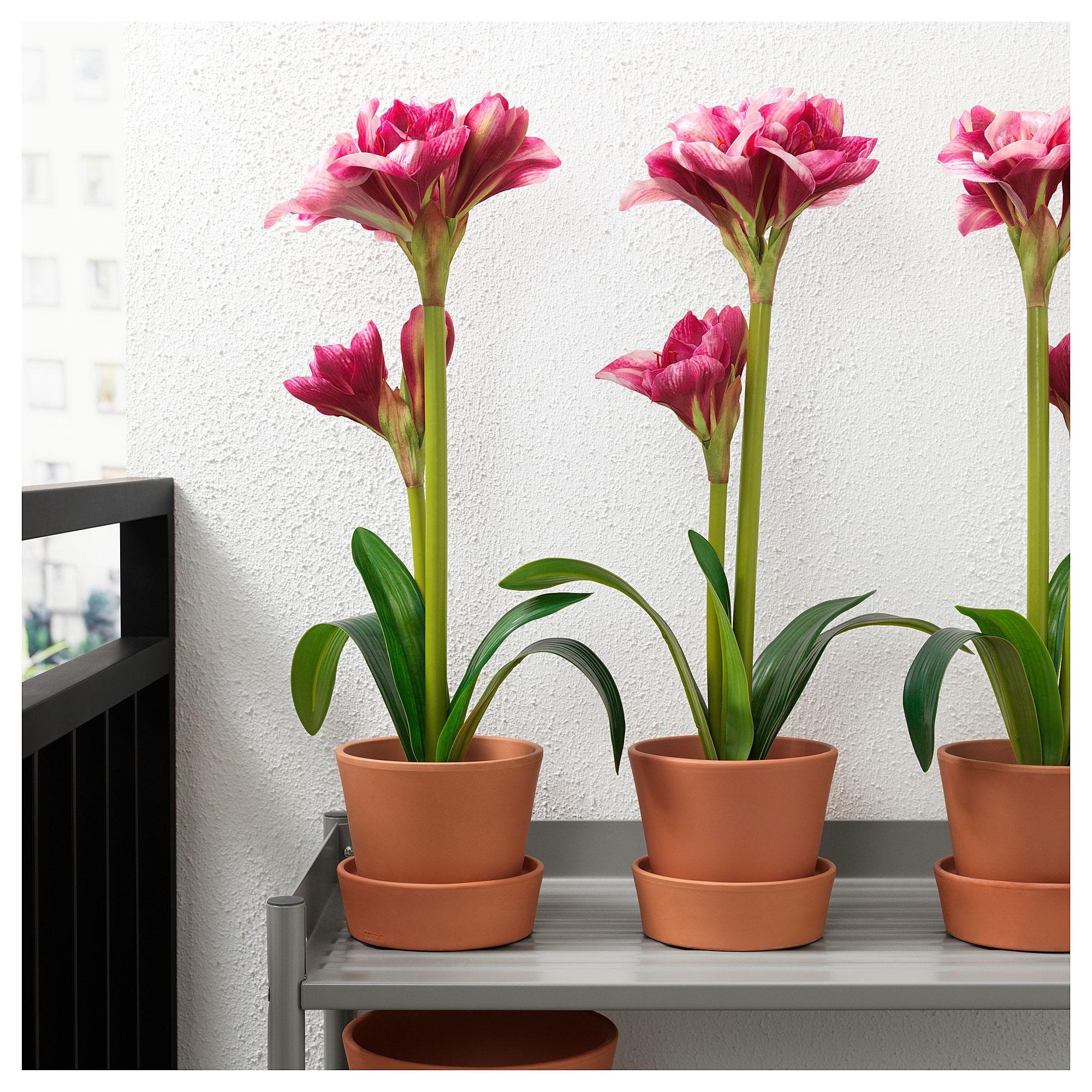 Ingefara Plant Pot With Saucer Outdoor Indoor Outdoor Terracotta 4 12 Cm Terracotta Plant Pots Plants Terracotta