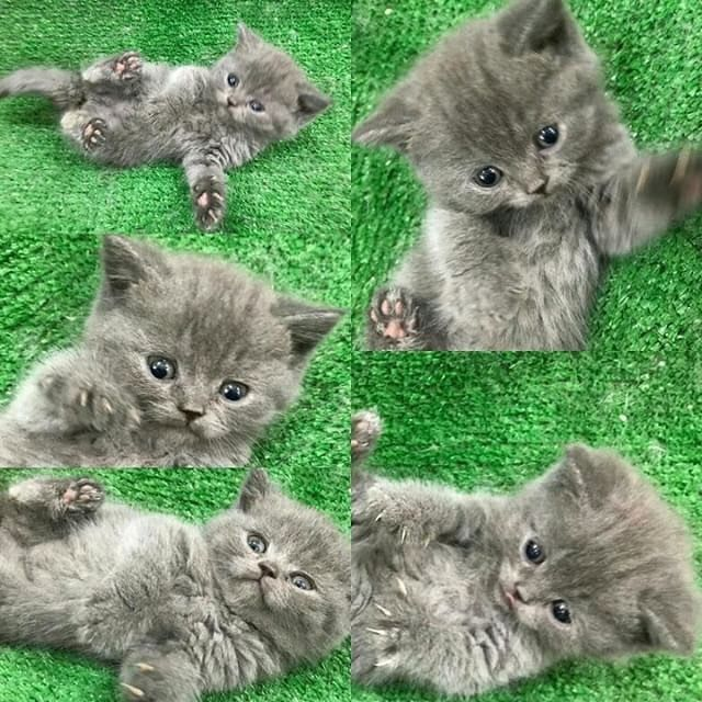 Cuteeee Pretty Cats Beautiful Cats Cute Cats And Kittens