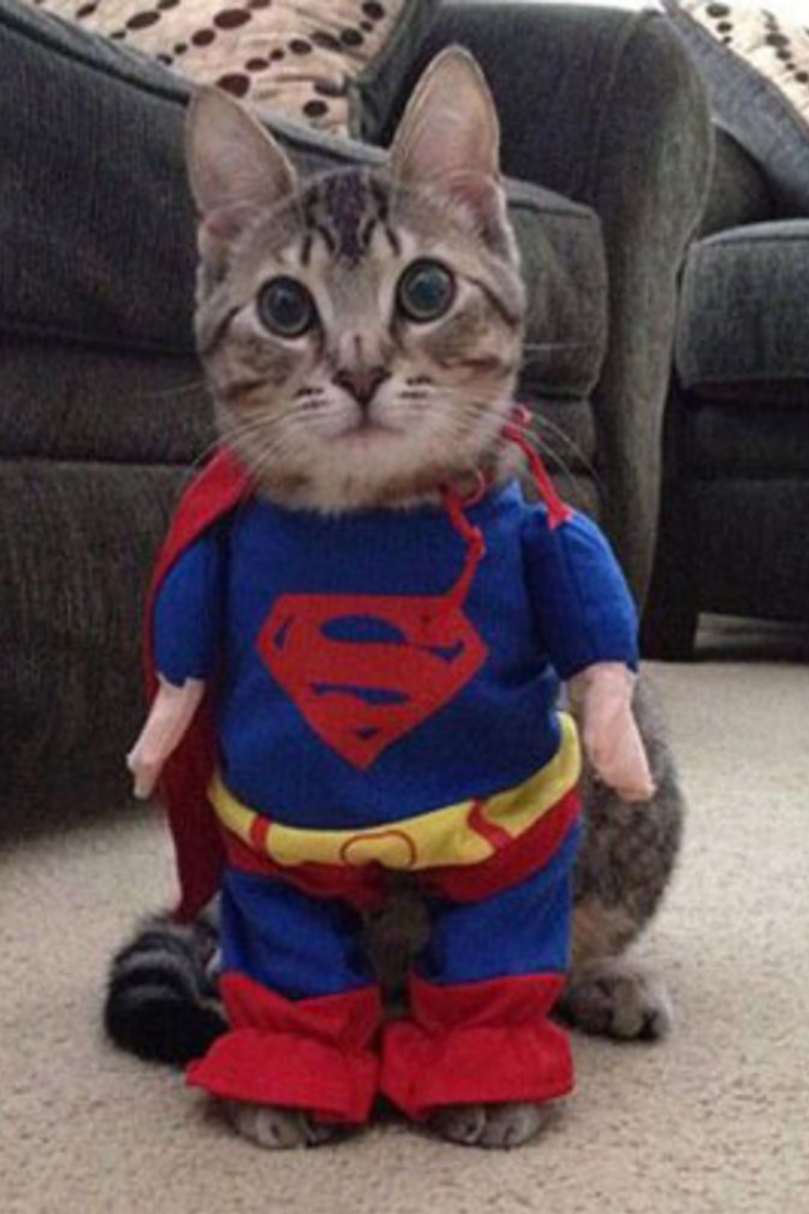 Quatang Gallery- Deguisement Animaux Deguisement Chat Superman Deguisement Pour Chat Deguisement Chat Chien Halloween