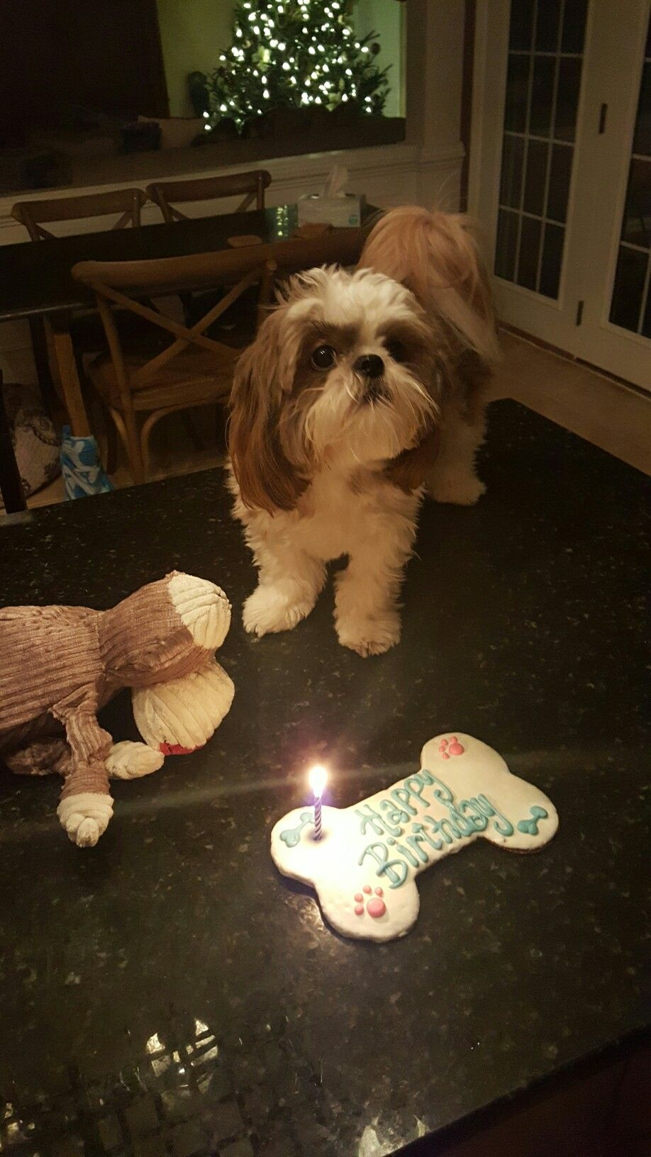 Shih Tzu Winston 1 Year Old Dogs Pinterest Shih Tzu Dogs And