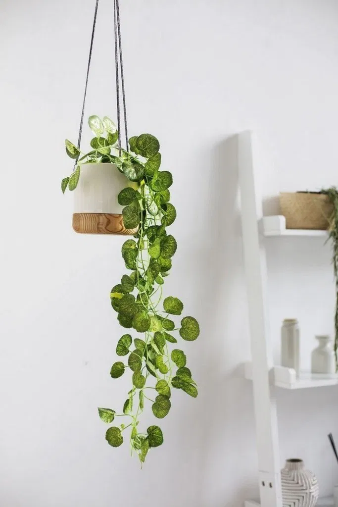 27 Pretty Indoor Hanging Plants Ideas