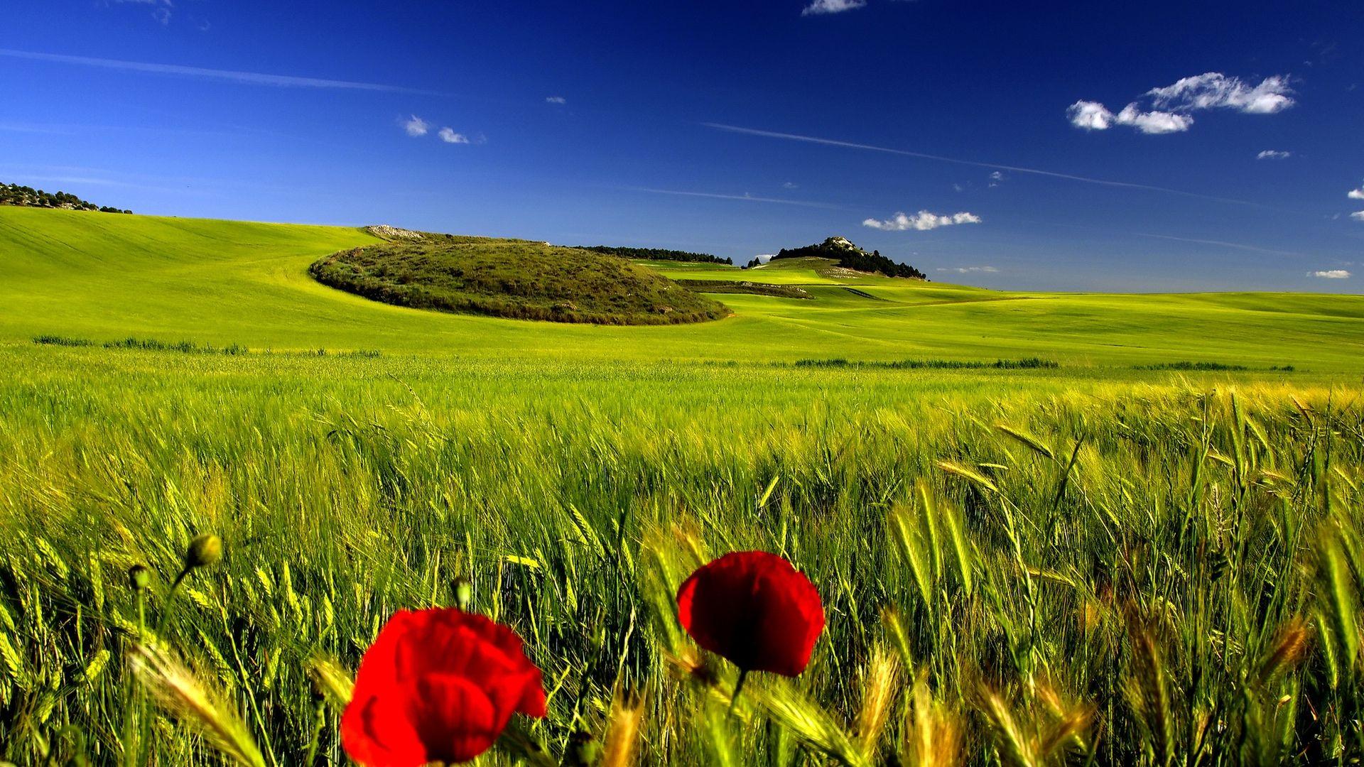 Hd wallpaper download nature - Hd Wallpaper Download Nature Wallpapers Hd Free Download 6986 Hd Wallpaper 3d