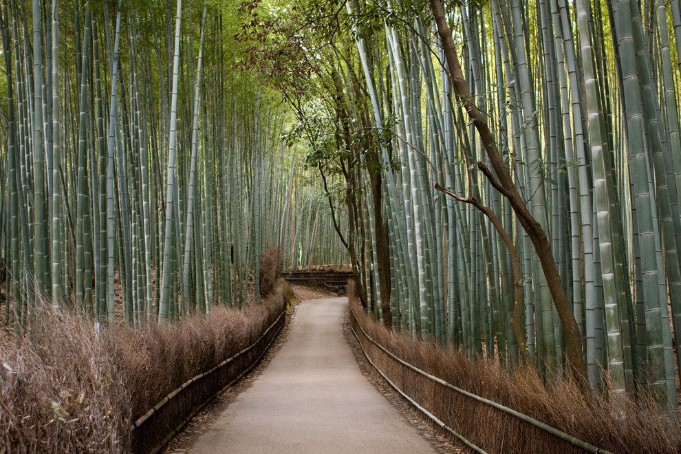 Arashiyama, Kioto, Japón | Los 23 lugares más increíbles en la tierra para fumar marihuana