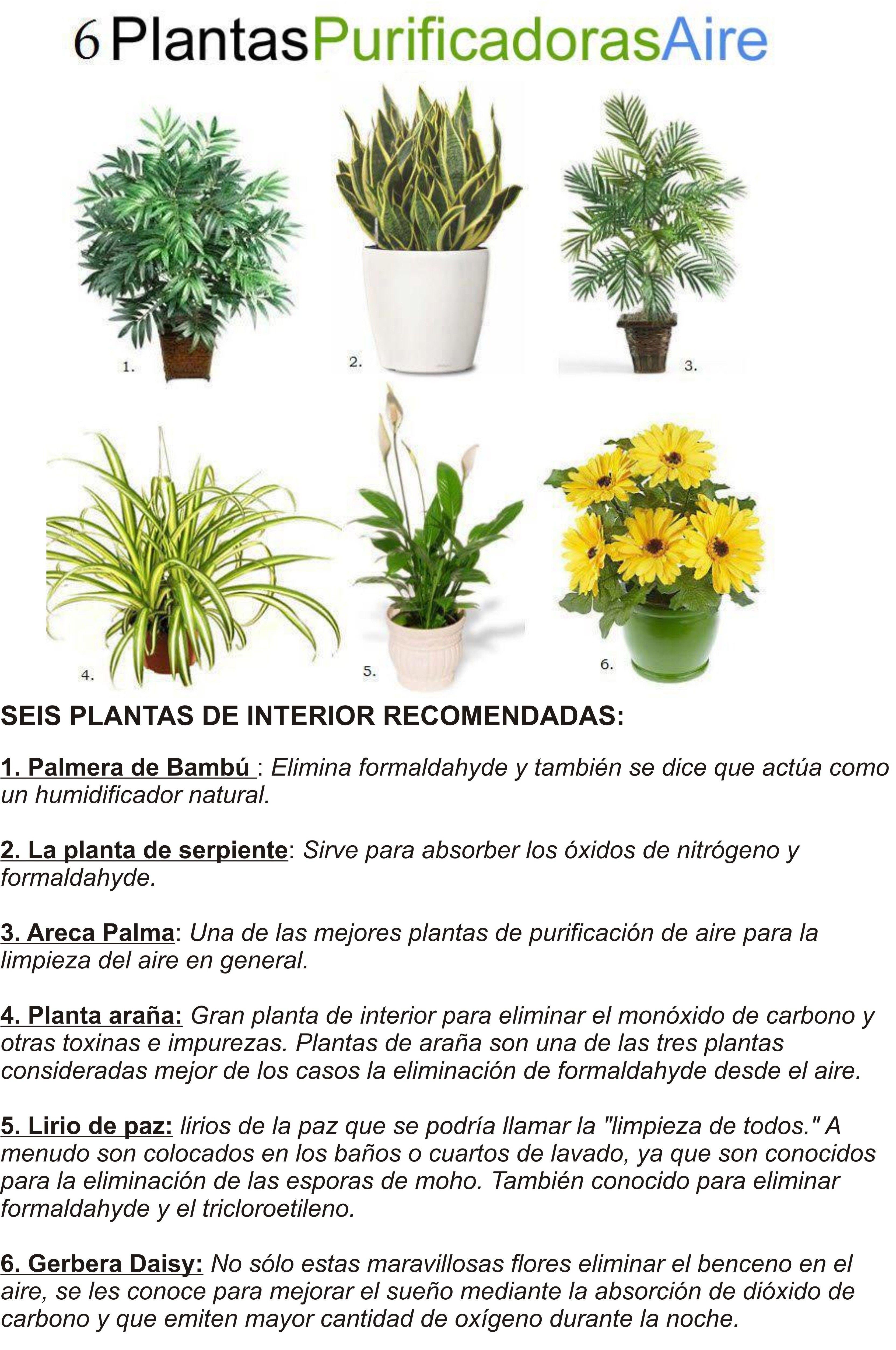 Plantas De Interior Purificadoras De Aire Con Imagenes Plantas