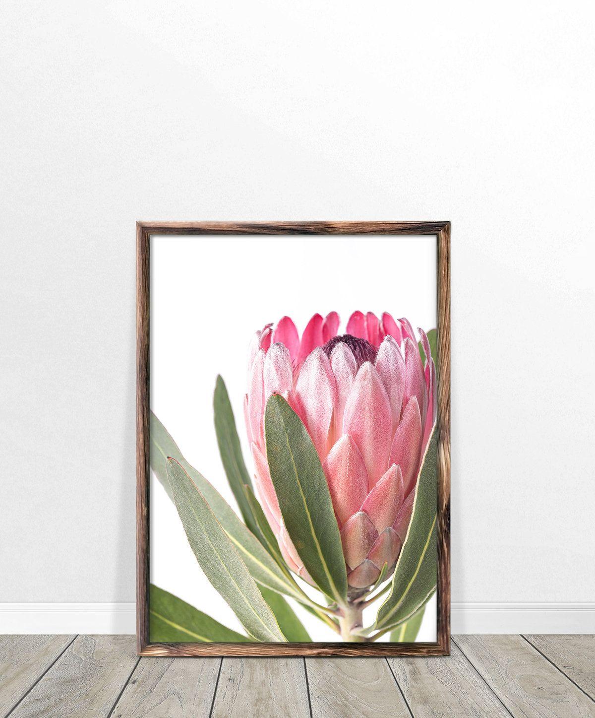Protea Print Flower Wall Art Printable Poster Digital Etsy Flower Wall Art Printable Wall Art Flower Wall
