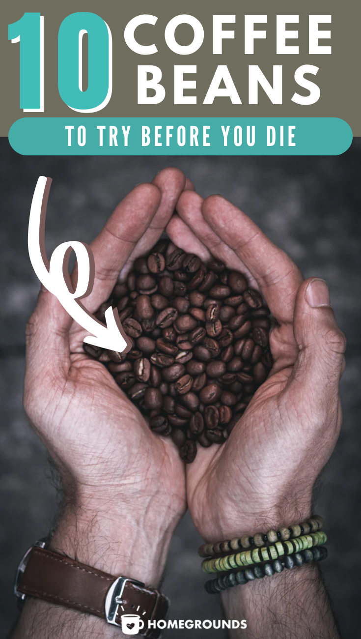Best Coffee Beans in the World (and beans to AVOID a