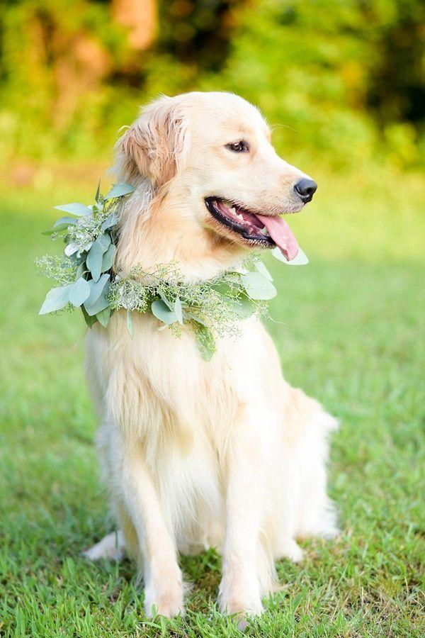 Sweet Whimsical Farm Wedding Inspiration Wedding Dog Collar Dog Flower Collar Wedding Pets