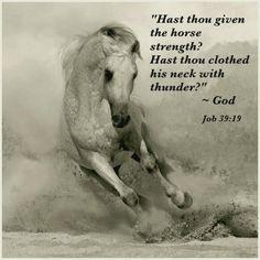 job 39:19 ~ Christian Cowboys | horse lovers | Horses, Horse ...