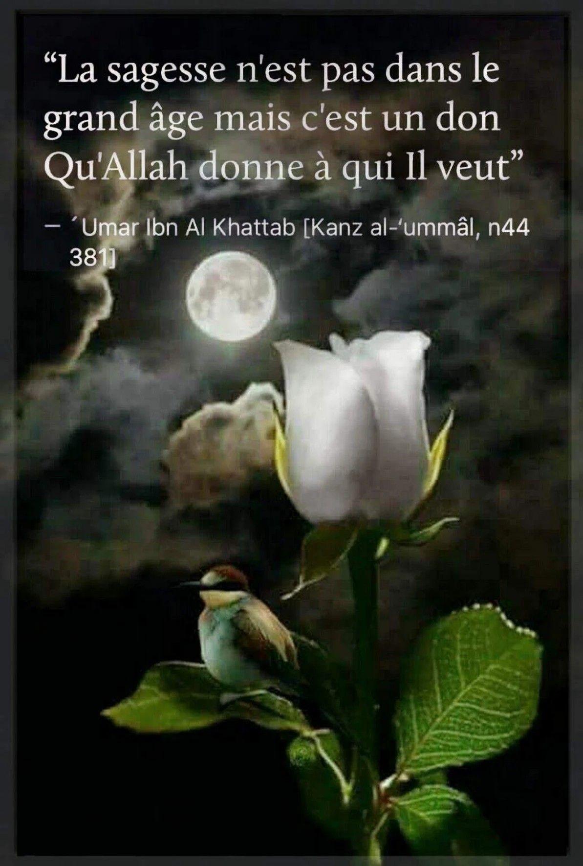 Omar Ibn Khattab La Sagesse Citations Musulmans