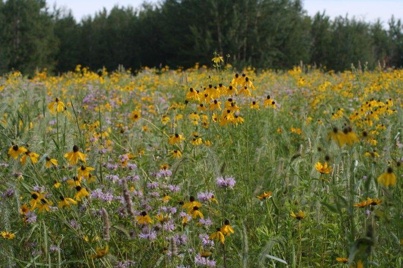 Economy Backyard Mix Landscape Native Plant Gardening Backyard
