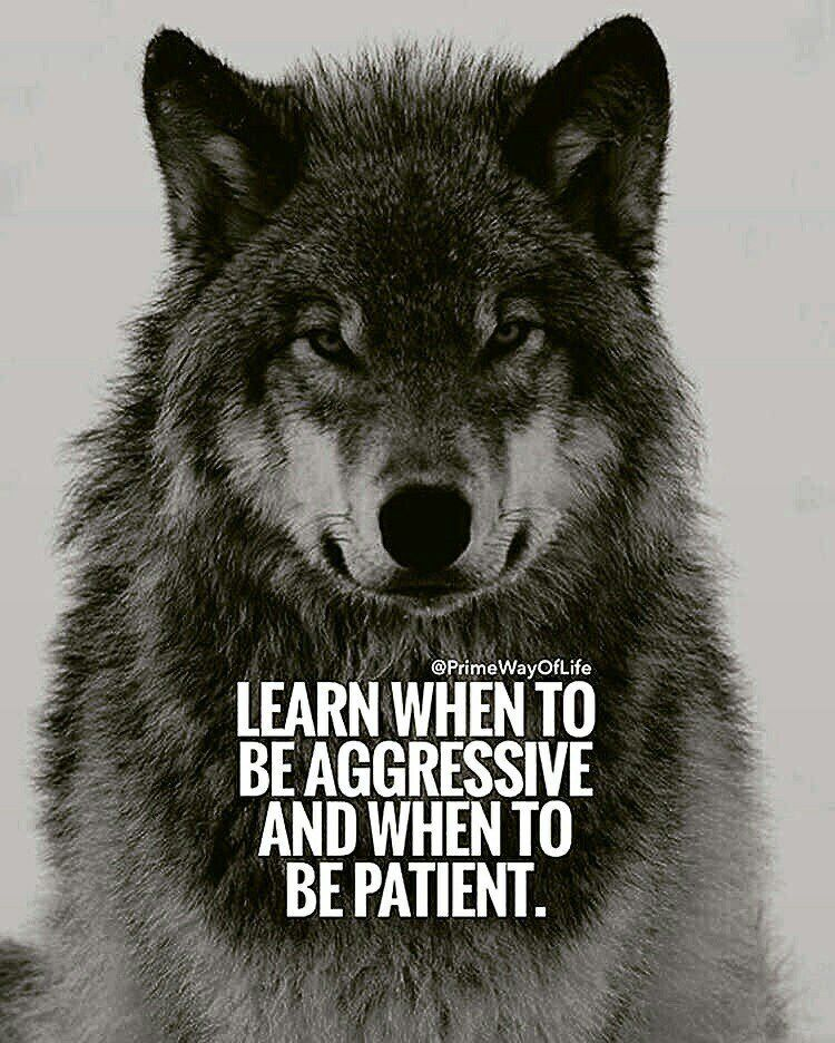 Pin by Todd Harris on Motivation Wolf quotes, Life