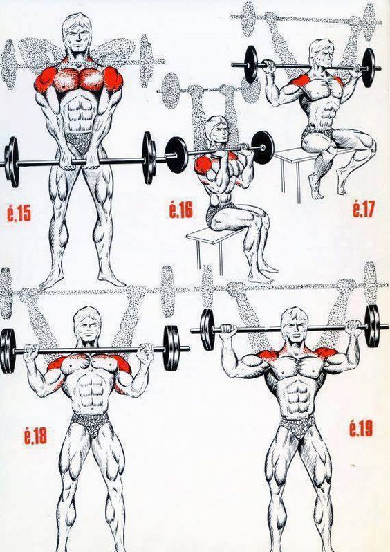 Check This Effective Workout Program Correct Cues For Scapular Motion