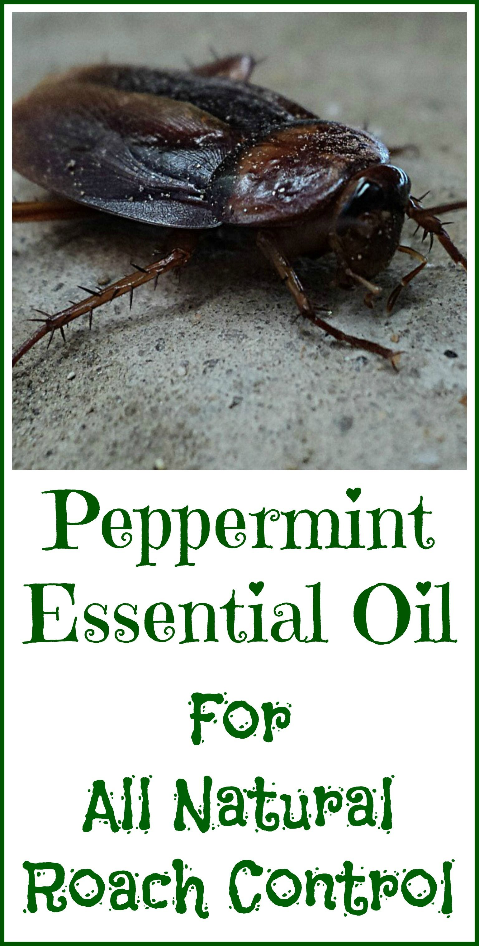Peppermint Oil For Roaches Organic Palace Queen Essential Oils Roaches Peppermint Essential Oil Roaches