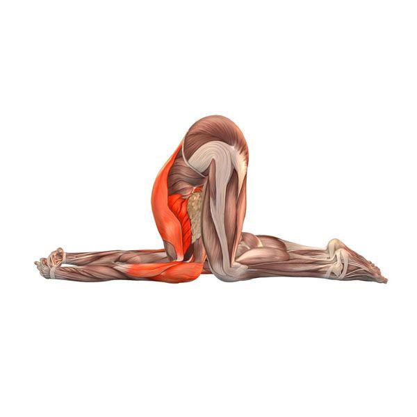Ear Pressure Pose Karnapidasana Yoga Poses Yoga Com
