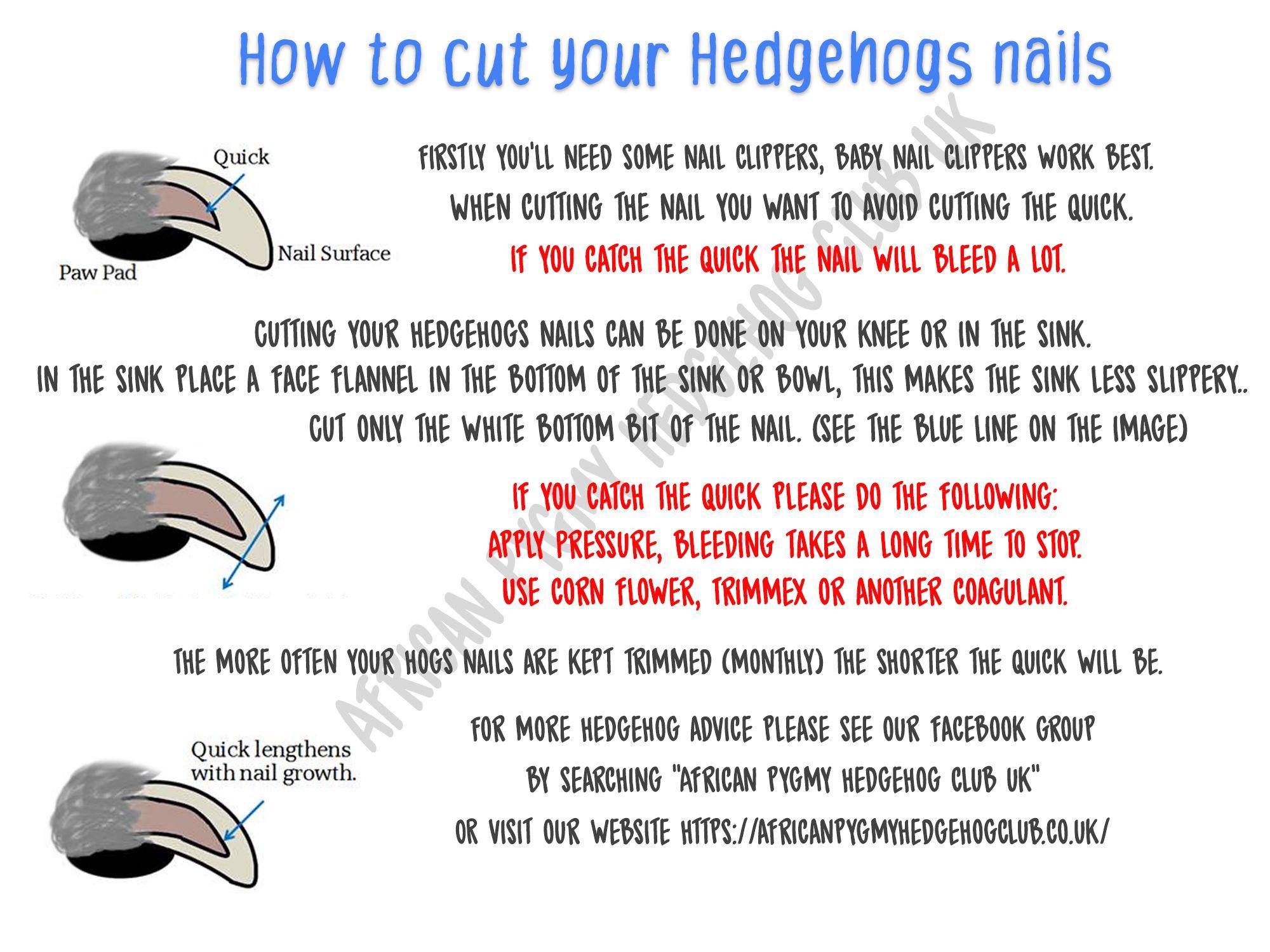 Pin On Hedgehog Care