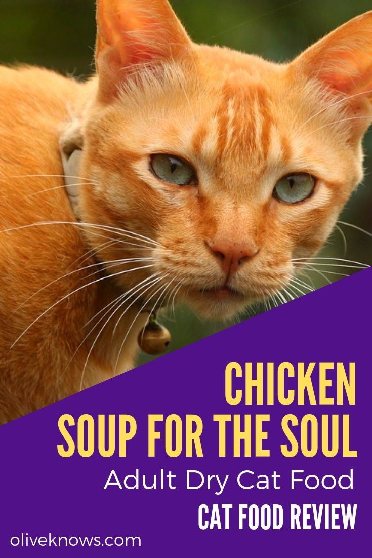 Chicken Soup for the Soul Adult Dry Cat Food Review Cat