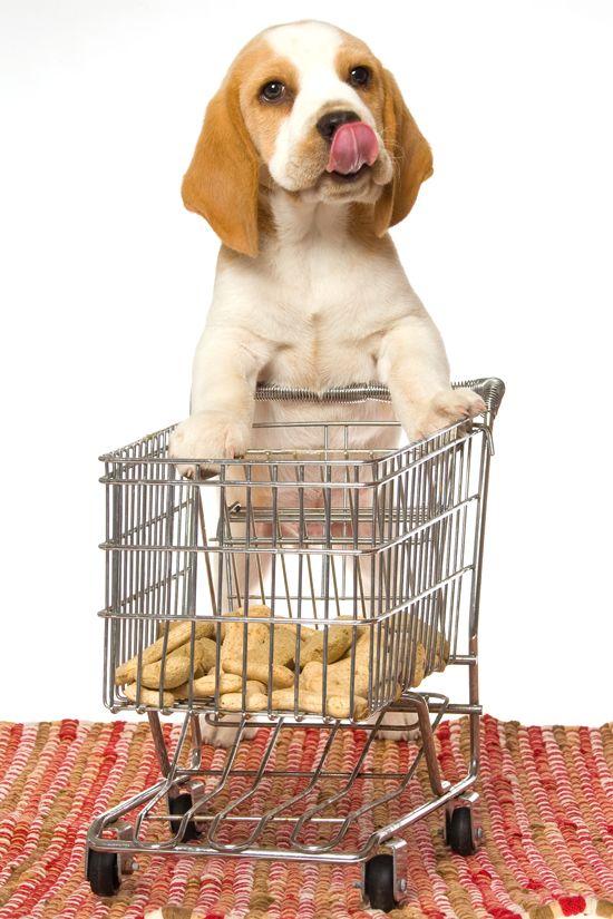 According To Australia Pet Food Market Forecast Opportunities