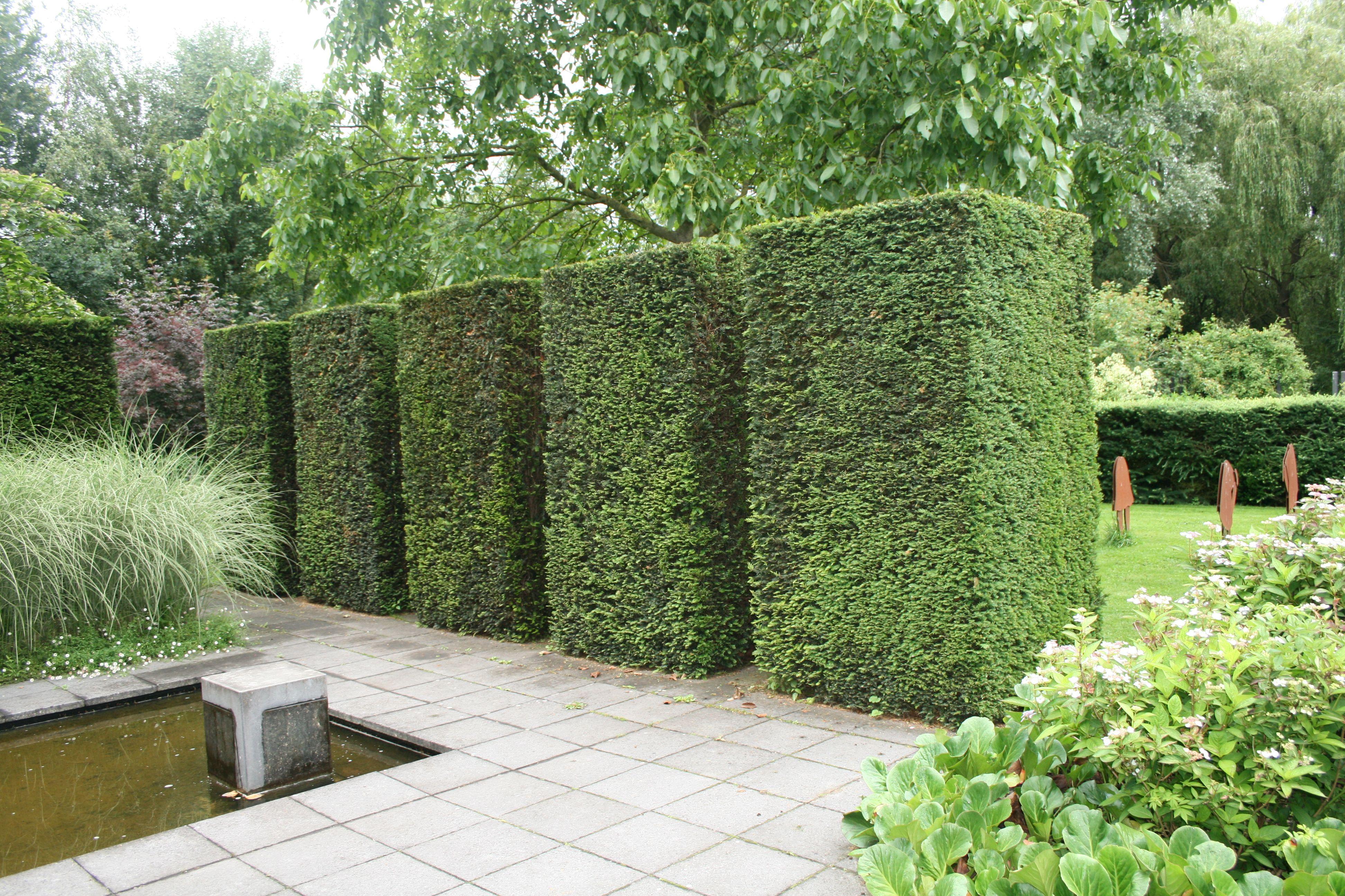 Formschnitt Eiben Wasser Im Garten Graser Wasser Im Garten Garten Moderne Gartenentwurfe