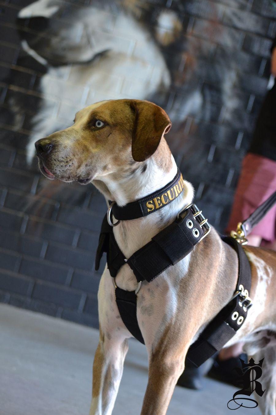 Supatuff Heavy Duty Harness Dog Harness Reactive Dog Dog Leash