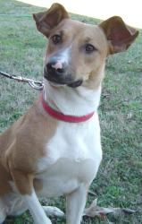 Adopt Sugar Pending Adoption On Petfinder Dogs Collie Mix Adoption