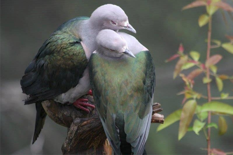 Beautiful Doves romantically inclined.