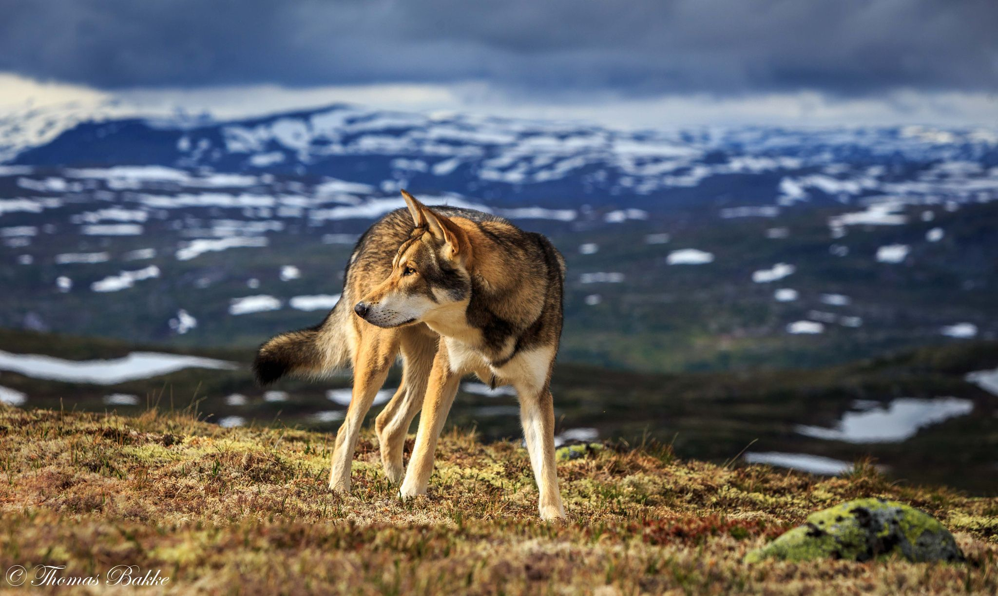 Looking by thomas bakke on px dog photography pinterest