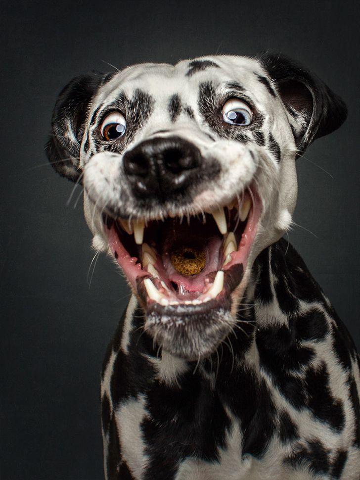 Собака смешная в картинках