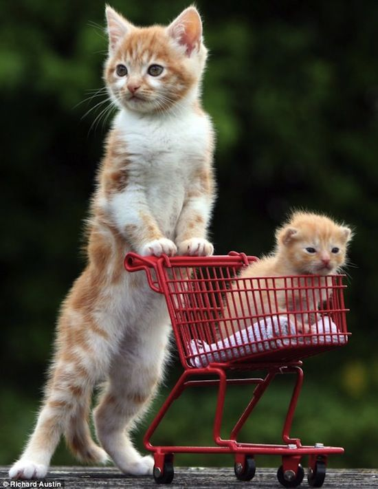 Too Cute Baby Animals Pictures Cute Baby Animals Cute Animals