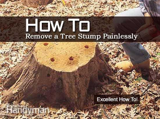 How To Remove A Tree Stump Painlessly Landscaping Around Trees Tree Stump Stumped