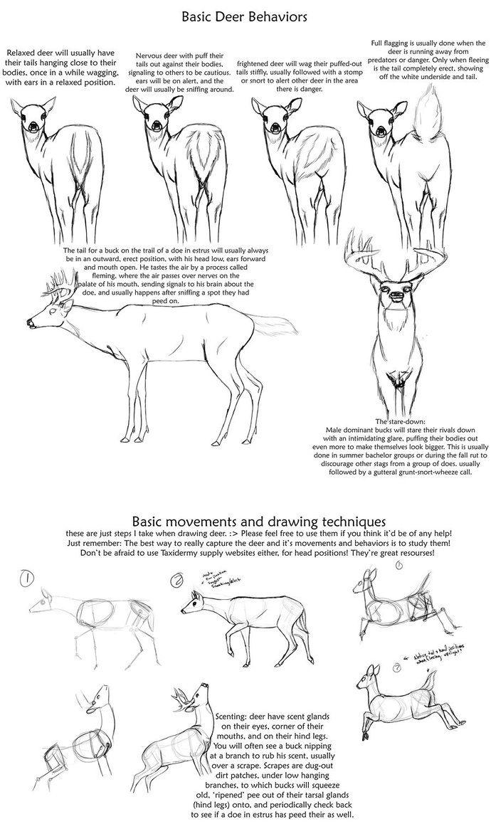 Basic Deer behavior tutorial by creepygoth666 on DeviantArt | Animal ...
