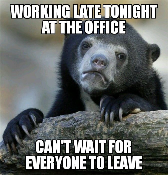 Working Late Office Animal