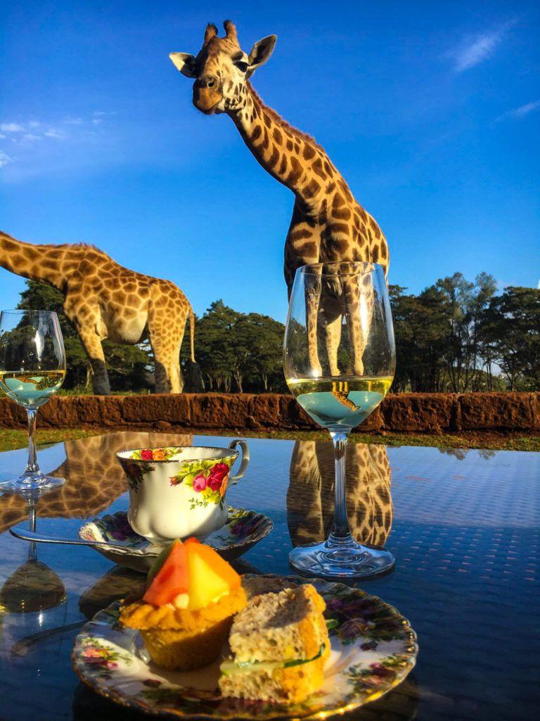 Afternoon Tea With Giraffes At Giraffe Manor In Nairobi